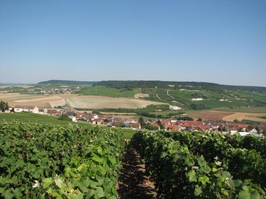 les paysages de champagne