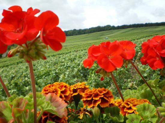fleurs et vignes